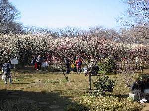 赤塚溜池公園周辺