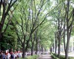 高島平団地とけやき並木