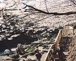 日本の都市公園百選定