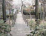 緑の吊り橋・音無さくら緑地